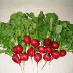2004-05-16 - Radishes from our garden - one square worth