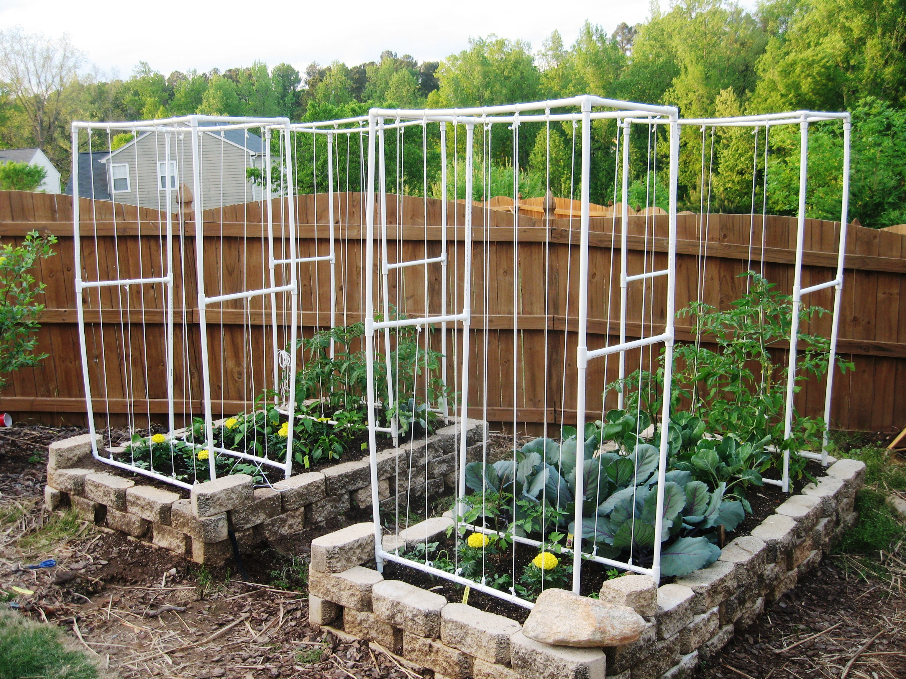 Typical Square Foot Garden With Pvc Frames For Vertical Plants