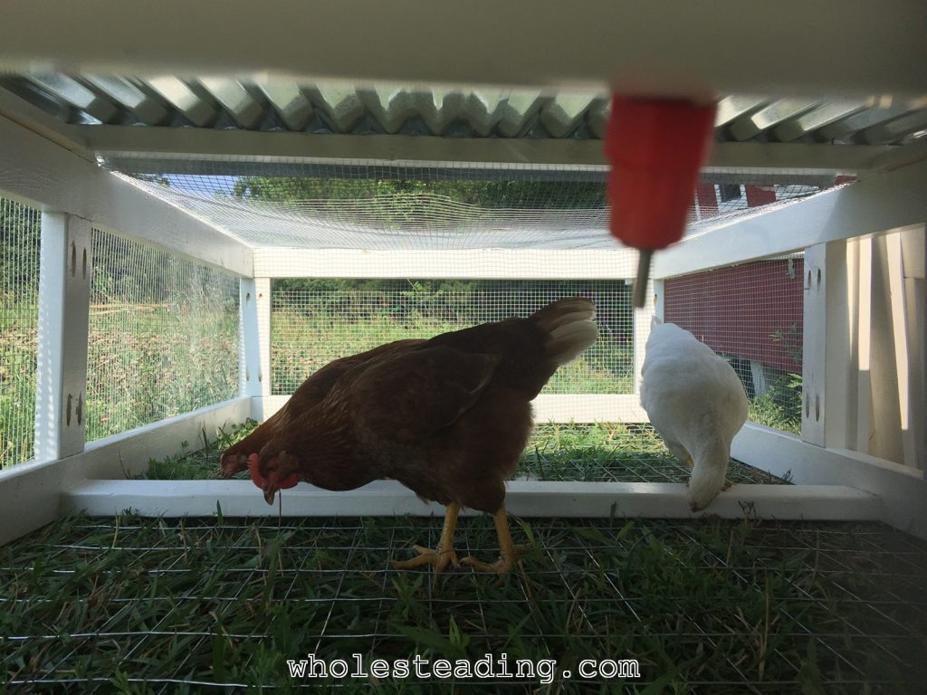 Wholesteading-com_Chicken_Tractor_25