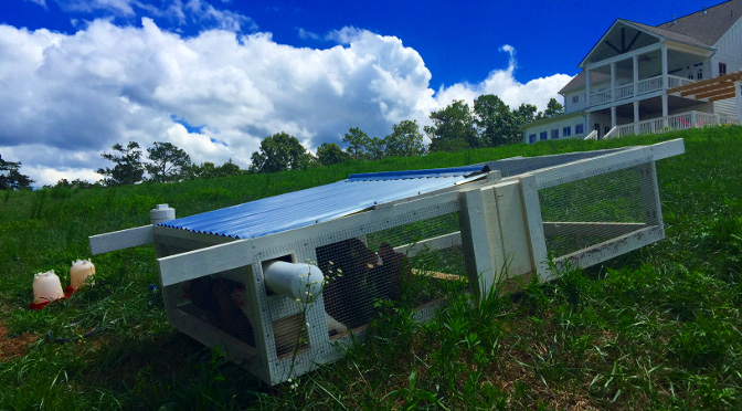 Homemade Chicken Tractor: a mobile home for hens